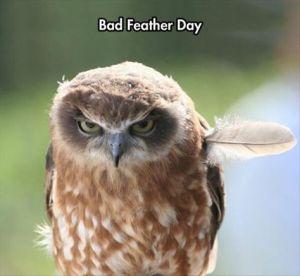 owlbadday
